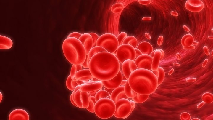 Microscopic image of a blood clot